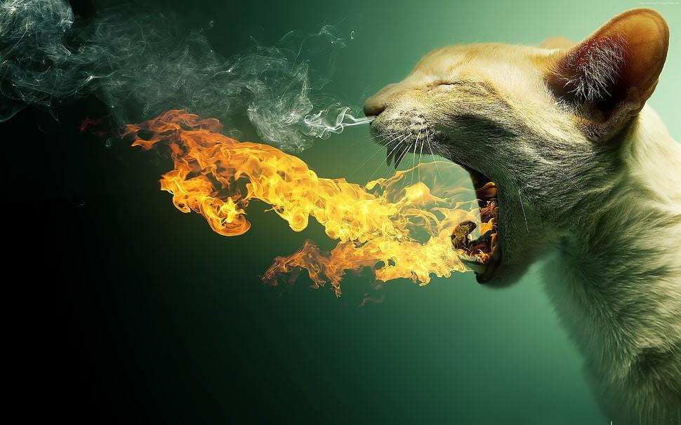 kitty-fire-flaming-kitten-wallpaper-preview.jpg