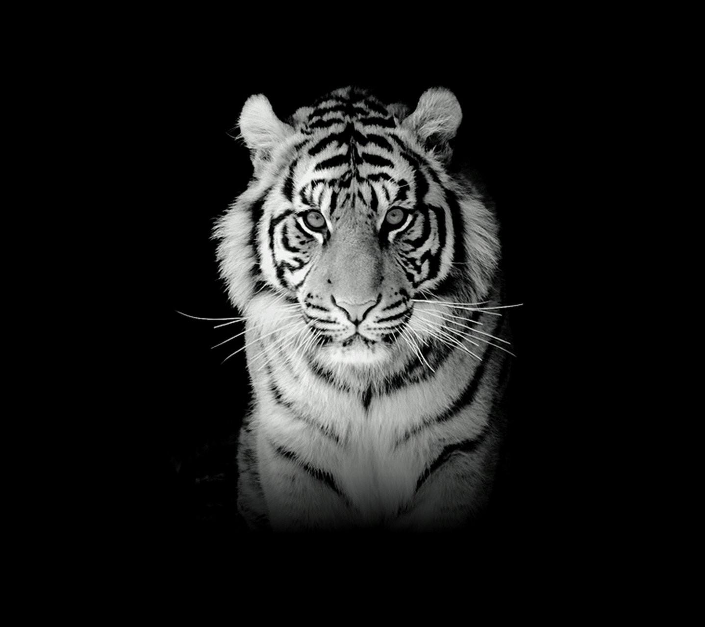 macan.jpg