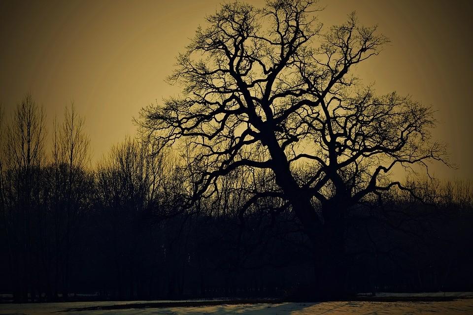 pohontua.jpg